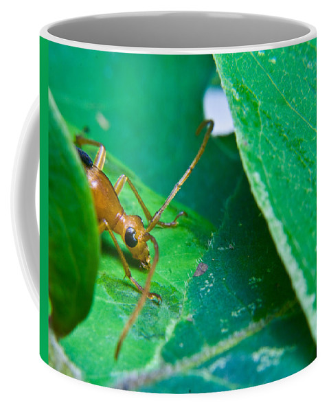 Beetle Coffee Mug featuring the photograph Here's Looking At You by Douglas Barnett