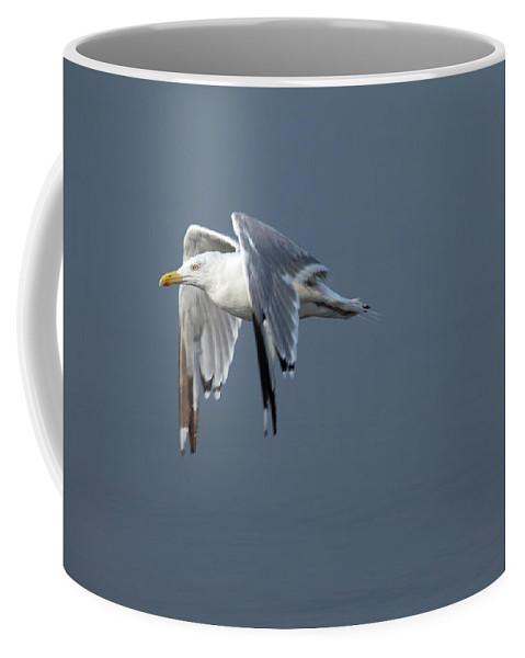 Flight Coffee Mug featuring the photograph Herring Gull In Flight by Karol Livote