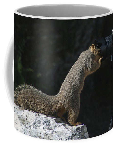 Squirrel Coffee Mug featuring the photograph Hey Anybody Home? by Dennis Reagan
