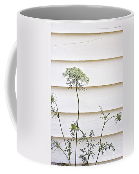 Flower; Wild; Weed; Queen Anne's Lace; Row; Outdoors; Outside; Nature; Beautiful; Plant; Rural; Country; Lovely; White; Green; Siding; House; Wood; Clapboard; Carrot Weed Coffee Mug featuring the photograph High And Mighty by Margie Hurwich