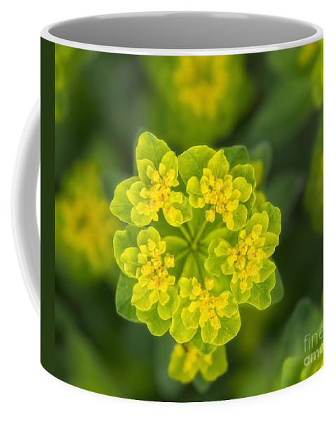 Yellow Coffee Mug featuring the photograph High Five by Claudia Kuhn