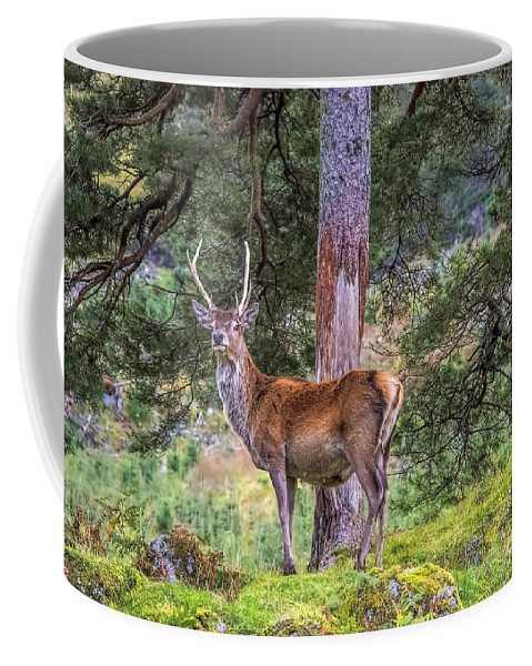 Highland Stag Coffee Mug featuring the photograph Highland Stag by Chris Thaxter