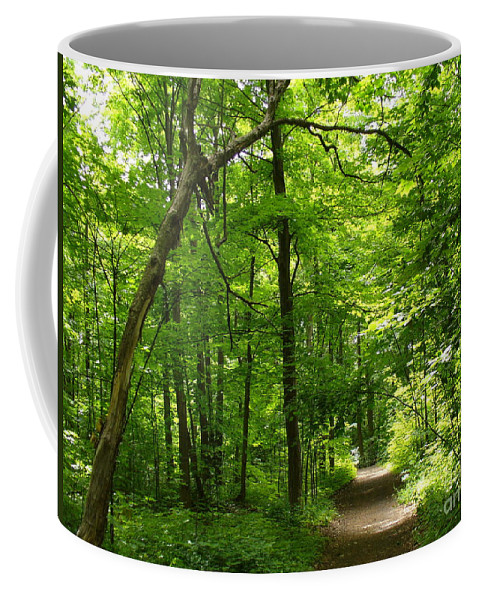 Nature Coffee Mug featuring the photograph Hiking Trails To Mont Morency Falls by Lingfai Leung