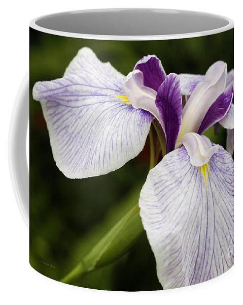 Iris Coffee Mug featuring the photograph Hint Of Purple by Deborah Benoit