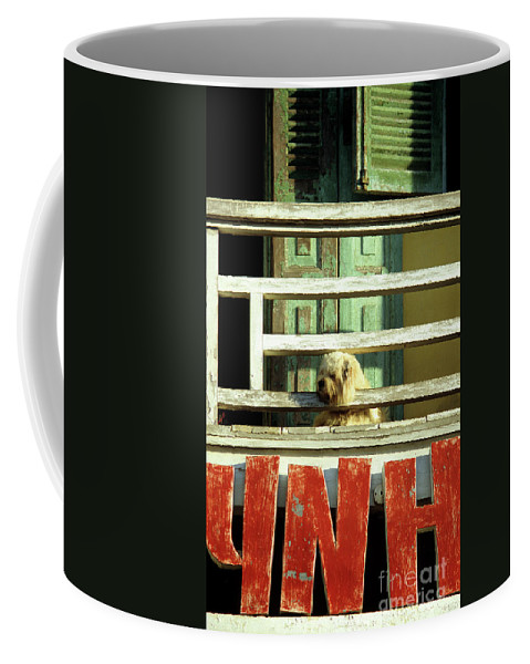 Vietnam Coffee Mug featuring the photograph Hoi An Dog 01 by Rick Piper Photography