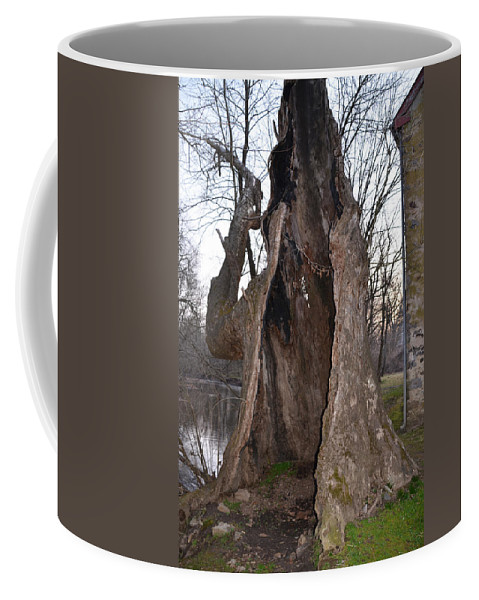 Hollow Coffee Mug featuring the photograph Hollow Tree At Mather Mill by Bill Cannon
