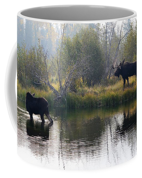 Wildlife Coffee Mug featuring the photograph Honey I'm Home by Deanna Cagle