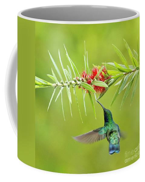 Bird Coffee Mug featuring the photograph Honey Sucking by Heiko Koehrer-Wagner