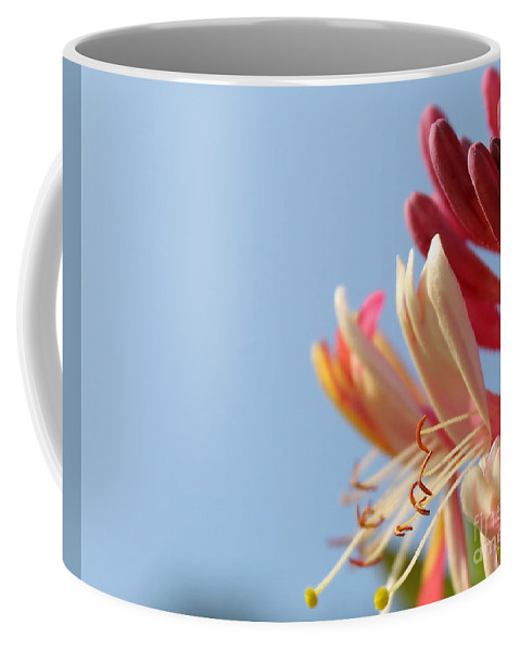 Honeysuckle Coffee Mug featuring the photograph Honeysuckle And Sky by Renee Croushore