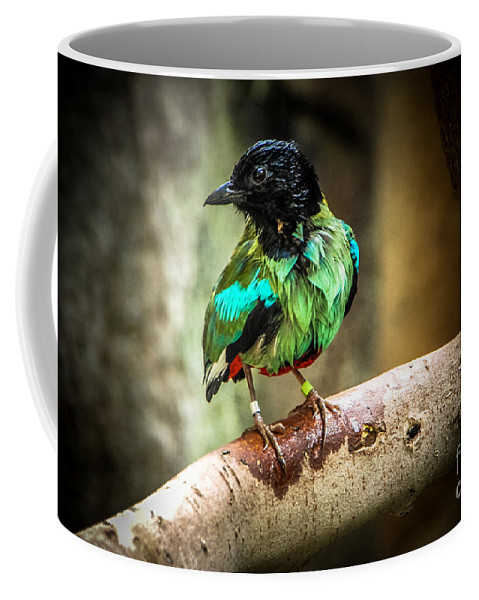 Bird Coffee Mug featuring the photograph Hooded Pitta by Grace Grogan
