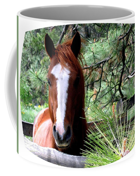 Horse Coffee Mug featuring the photograph Horse Country by Will Borden