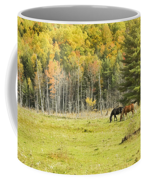 Horse Coffee Mug featuring the photograph Horse Grazing In Field Autumn Maine by Keith Webber Jr