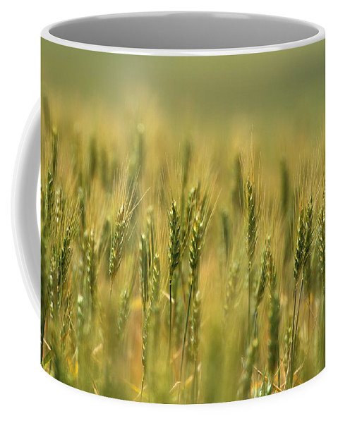 Wheat Coffee Mug featuring the photograph Horse Heaven Wheat by Lynn Hopwood