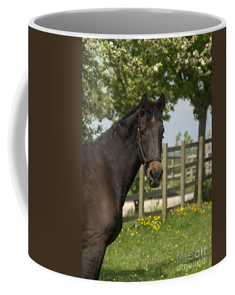 Horse Coffee Mug featuring the photograph Horse In Spring by Linsey Williams
