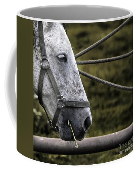 Horse Coffee Mug featuring the photograph Horse's Head by Angel Ciesniarska