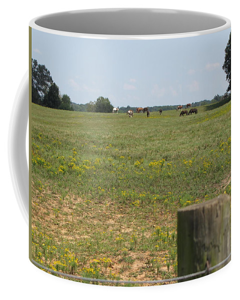 Horses Coffee Mug featuring the photograph Horses In The Field by Beth Vincent