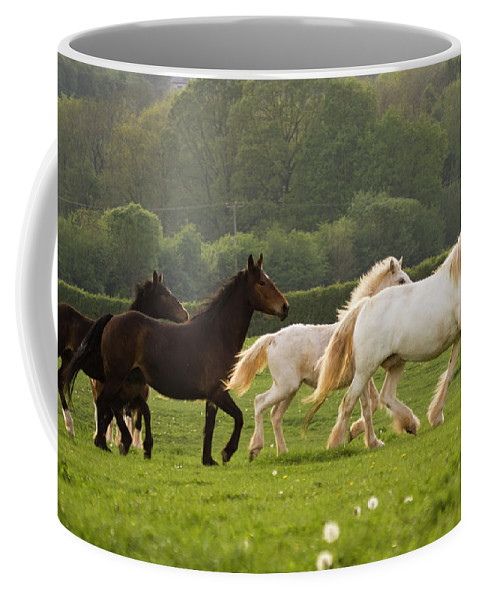 Coffee Mug featuring the photograph Horses On The Meadow by Angel Ciesniarska
