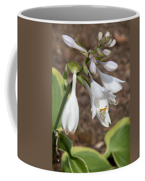 Beautiful Coffee Mug featuring the photograph Hosta by Scott Sanders
