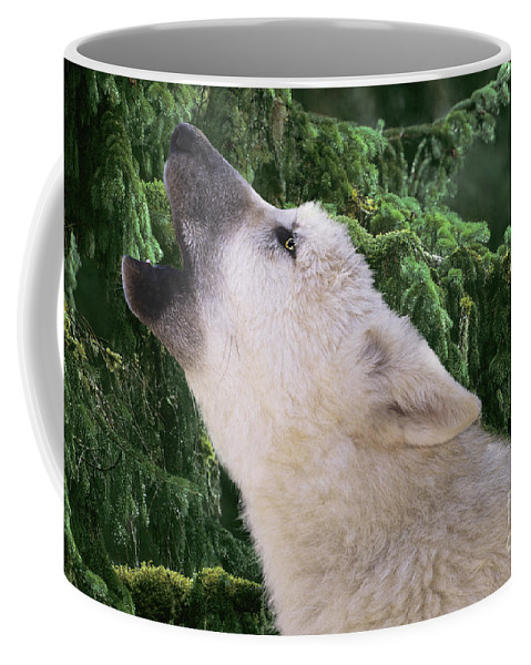 Arctic Wolf Coffee Mug featuring the photograph Howlling Arctic Wolf Pup Endangered Species Wildlife Rescue by Dave Welling