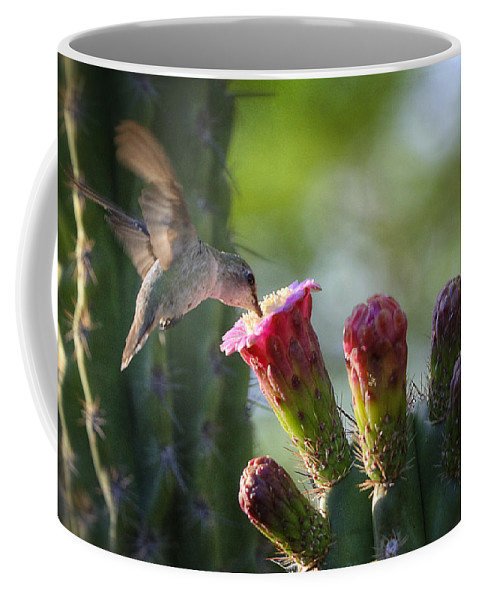 Hummingbird Coffee Mug featuring the photograph Hummingbird Breakfast Southwest Style by Saija Lehtonen