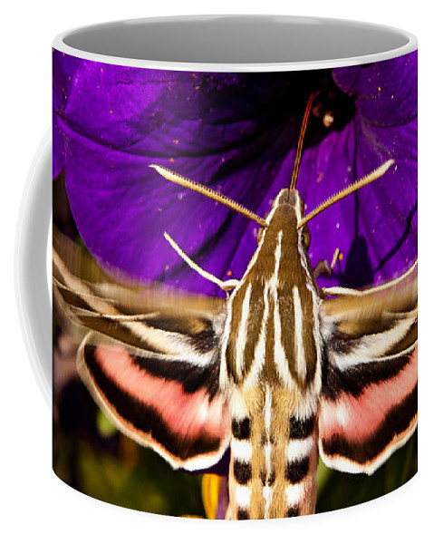 Moth Coffee Mug featuring the photograph Hummingbird Moth  #8645 by J L Woody Wooden