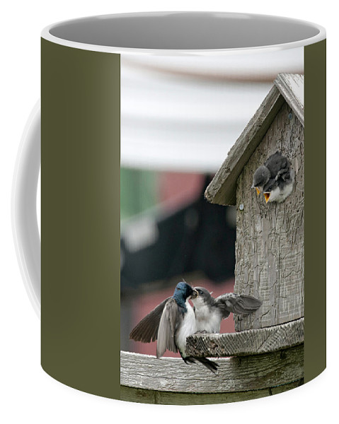 Swallow Coffee Mug featuring the photograph Hungry Babies by Betty Depee