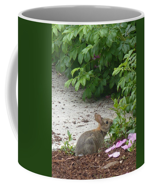 Bunny Coffee Mug featuring the photograph Hungry Bunny by Nicki Bennett