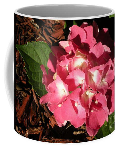 Flower Coffee Mug featuring the photograph Hydrangea Flower by Graciela Castro