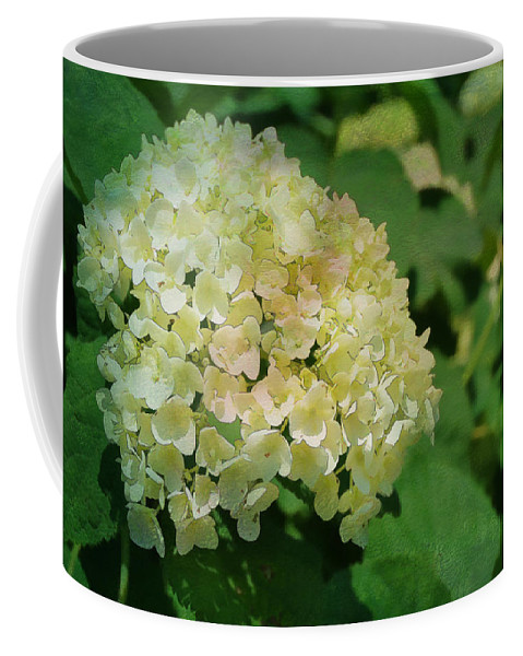 Digital Coffee Mug featuring the photograph Hydrangea In Soft Light by Paulette B Wright