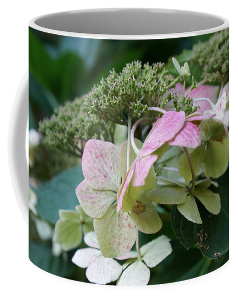 Hydrangea Coffee Mug featuring the photograph Hydrangea White And Pink I by Jacqueline Russell