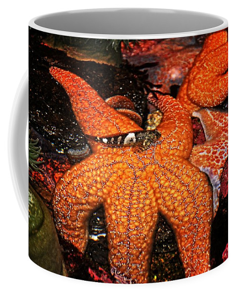 Newport Coffee Mug featuring the photograph I Have Got Your Back by Image Takers Photography LLC - Laura Morgan