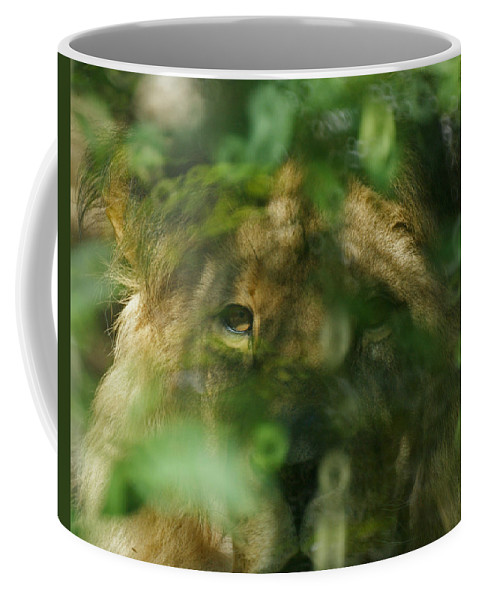 Animals Coffee Mug featuring the photograph I See You by Ernie Echols