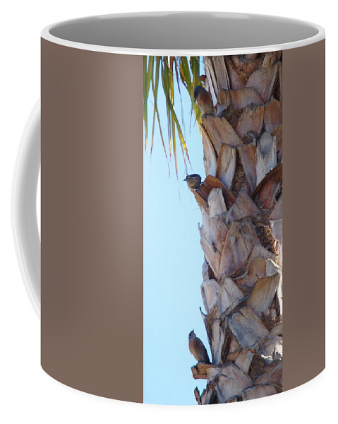 Linda Brody Coffee Mug featuring the photograph I See You Two Above Me by Linda Brody