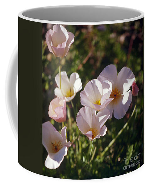 Flowers Coffee Mug featuring the photograph Icelandic Poppies by Kathy McClure