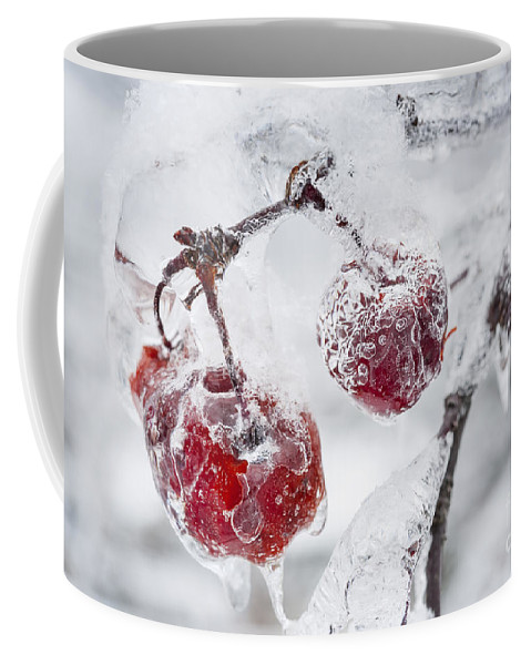 Crabapples Coffee Mug featuring the photograph Icy Branch With Crab Apples by Elena Elisseeva
