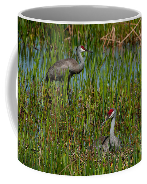 Sand Coffee Mug featuring the photograph I'll Watch Over You. by Photos By Cassandra
