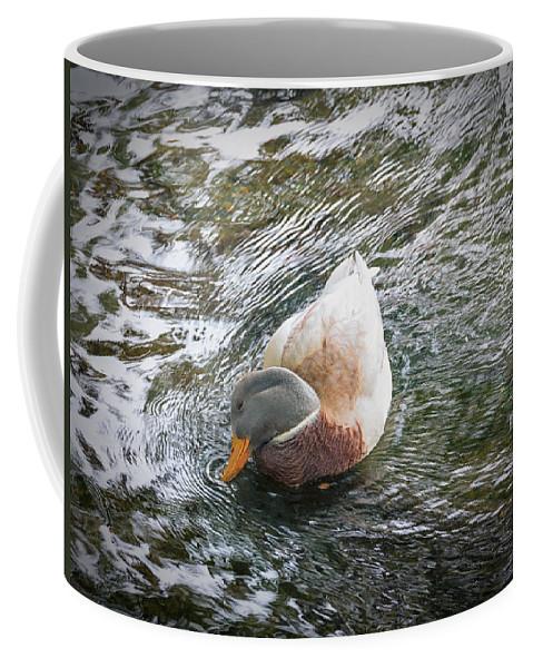Bird Coffee Mug featuring the photograph I'm So Shy by David Kay