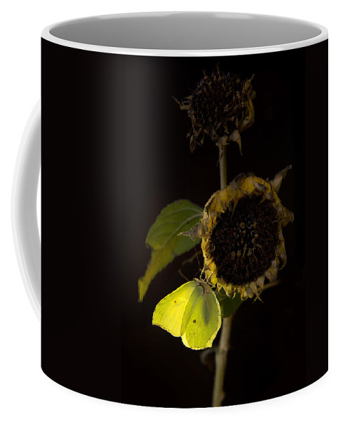 Sunflower Coffee Mug featuring the photograph Impression At Night by Jaroslaw Blaminsky