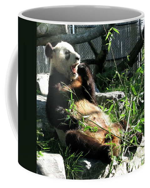 Er Shun Coffee Mug featuring the photograph In Need Of More Sleep. Er Shun Giant Panda Series. Toronto Zoo by Ausra Huntington nee Paulauskaite