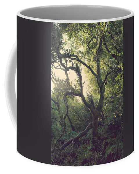Redwood Regional Park Coffee Mug featuring the photograph In Our Own Little Magical World by Laurie Search