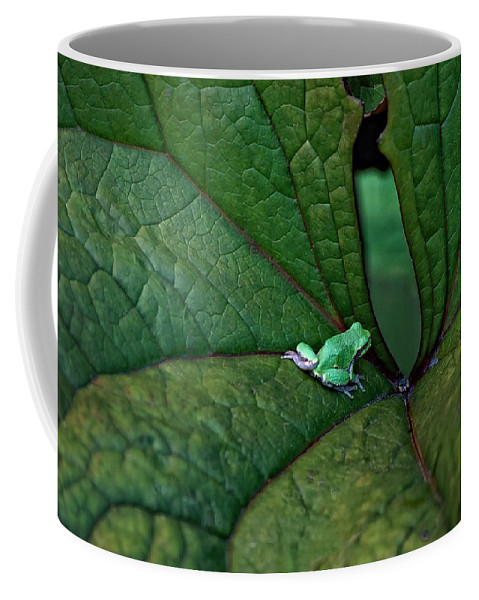 Leaf Coffee Mug featuring the photograph In The Groove by Steve Harrington