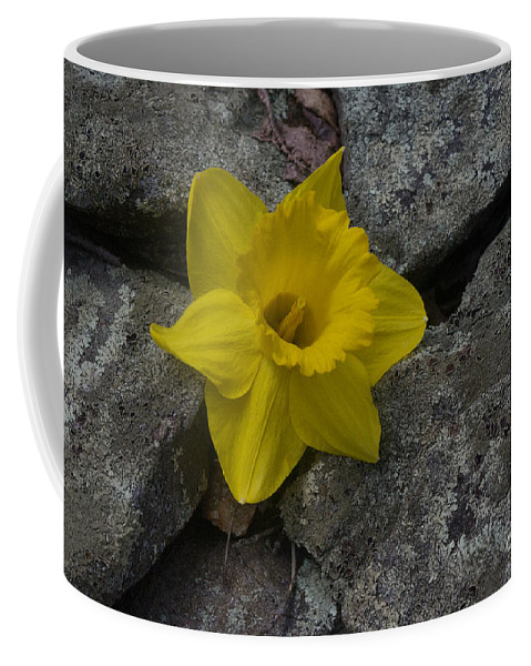 Daffodil Coffee Mug featuring the photograph In The Rocks by Ray Konopaske