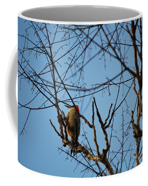 Florida Coffee Mug featuring the photograph In The Trees by Linda Kerkau