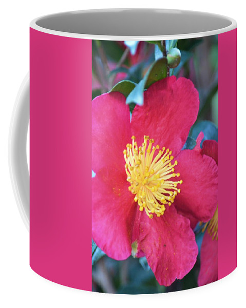 Indian Hawthorne Coffee Mug featuring the photograph Indian Hawthorne by Maria Urso