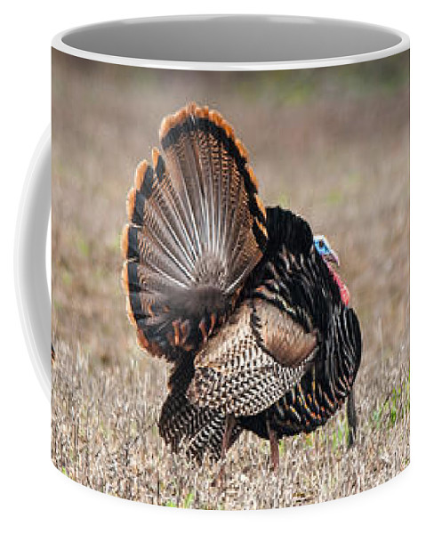 Wild Coffee Mug featuring the photograph Indifference by Richard Kitchen