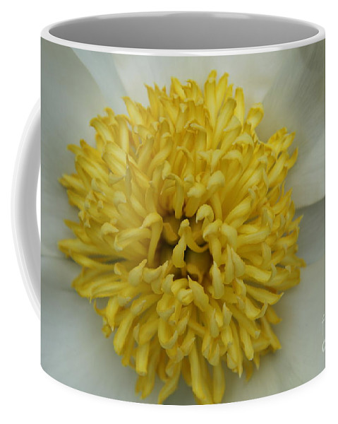 Peony Coffee Mug featuring the photograph Inner Section Of A White Peony by Christiane Schulze Art And Photography