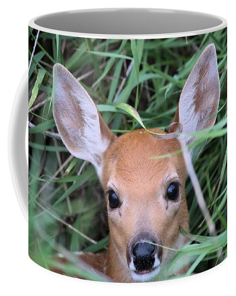 Deer Coffee Mug featuring the photograph Innocence by Bonfire Photography