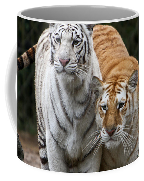 Tiger Coffee Mug featuring the photograph Intent Tigers by Douglas Barnett