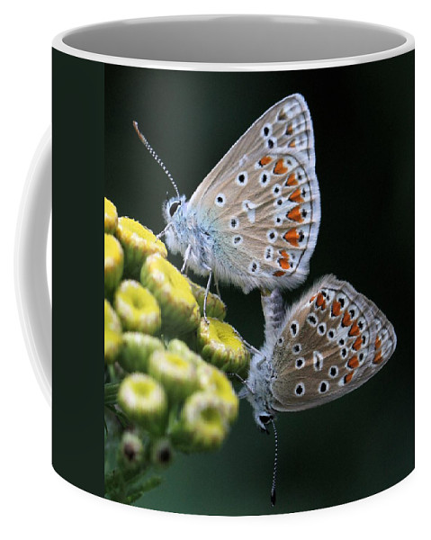 European Common Blue Butterfly Coffee Mug featuring the photograph Intimacy by Doris Potter