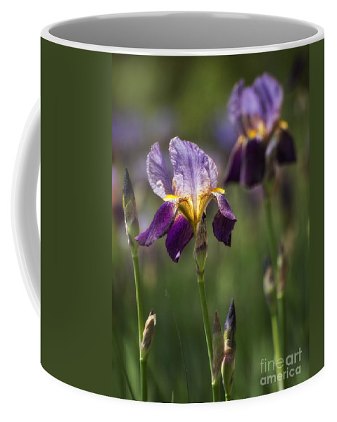 Purple Coffee Mug featuring the photograph Iris by Claudia Kuhn